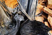 arid-region-trees_DSC_3487