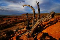 arid-region-trees_DSC_3508